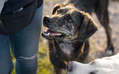 Bundeswehr Tierpfleger Einstellungstest: Das musst Du wissen